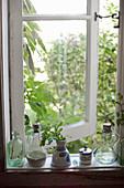 Flasche, Karaffen und Vase mit Kräuter auf Fensterbank