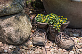 Walking boots used as decorative planters
