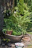 Planted zinc tub