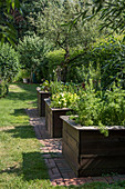 Raised beds in herb garden