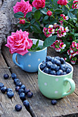 Blueberries and roses in mugs on wooden bench outdoors