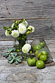 White pompom dahlias and green tomatoes in glass vessels and houseleeks on wooden surface