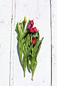 Frilled and plain tulips on white boards