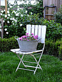 Pink verbena on old garden chair in front of box hedge and viburnum bush