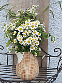 Bouquet of feverfew in old jug