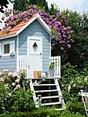 Rose 'Veilchenblau' climbing over roof of stilt house