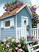 Climbing rose 'Veilchenblau' growing over stilt house in rose garden
