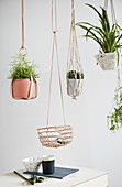 Plants in hanging baskets made from leather, macrame and basketwork