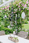 Summer terrace with climbing rose on the pergola