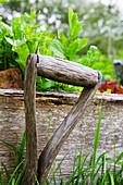 Rucola wächst in einem Holzbeet, davor ein altes Gartengerät