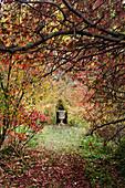 Blick durch herbstliche Sträucher auf eine Amphore im Garten