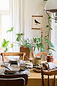 Houseplants seen across dining table