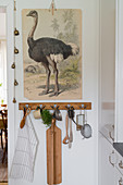 Vintage illustration of ostrich above kitchen utensils hanging from row of hooks