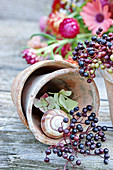 Elderberries and snail shell in plant pot