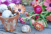 Cape daisy, seashells and snail shells in plant pot and eeverlasting flowers on wooden table