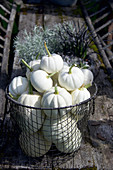 White baby boo pumpkins in a wire basket