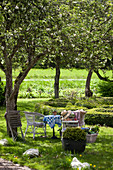 Wicker chairs in seating area below blossoming fruit trees in garden