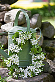 Wreath of fruit blossom on green metal watering can