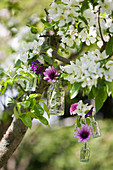 Purple flowers in small glass bottles hung in flowering fruit tree