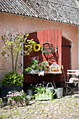 Flowers, plants and vintage accessories in courtyard outside red barn doors