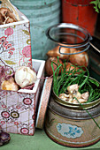 Flower bulbs in nest of grass in old biscuit tin
