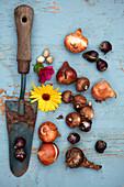Alte Schaufel, Ringelblume und Blumenzwiebeln