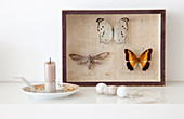 Butterflies mounted in picture frame, candle holder and bead necklace