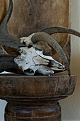 Animal skull with antlers and wooden trough as a rustic decoration