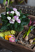 Primula rosea and decorative materials in wooden crate