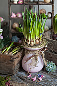 Grape hyacinths with bulbs in nest on top of vase