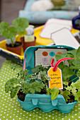 Seedlings of various plants in egg box as gift