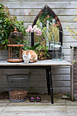 Cat sitting amongst autumnal accessories on garden table against board wall on terrace