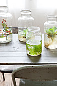 Plants in glass jars with water