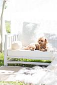 Dog on white bench in the garden