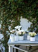 Schraubgläsern mit Manschetten aus Papier mit weißen Rosen und Chrysanthemen