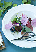 Hydrangea blossoms, pansies, sage and watercress in the plate