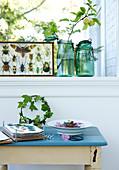 Blumenpresse und Efeukranz auf altem Tisch am Fenster mit Käfer-Sammlung