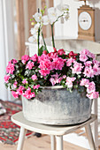 Begonias and azaleas with deep pink and pale pink flowers in zinc tub