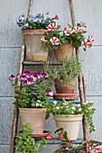 Flowering plants and herbs in terracotta pots on metal plant rack