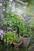 Herbs and flowering plants planted in baskets in garden