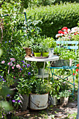Herbs and flowering plants in buckets, tins and baskets in garden