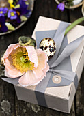 Pink poppy and quail egg on a gift in gray