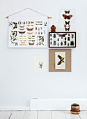 Insect boxes, posters with butterfly motifs, and postcards as wall decorations
