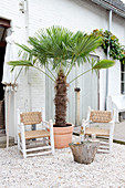 Palm tree and two colonial chairs in the inner courtyard with a gravel floor
