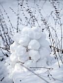 Windlicht aus Schneebällen im Garten