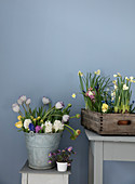 Metal bucket and wooden box with spring flowers in front of a gray wall