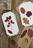 Pressed leaves on white paper and cardboard