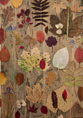 Colourful autumn leaves on a wooden background