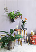 Arrangement of house plants in hanging baskets and on stools