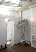 Olive tree in front of the glass door to the bathroom with skylight